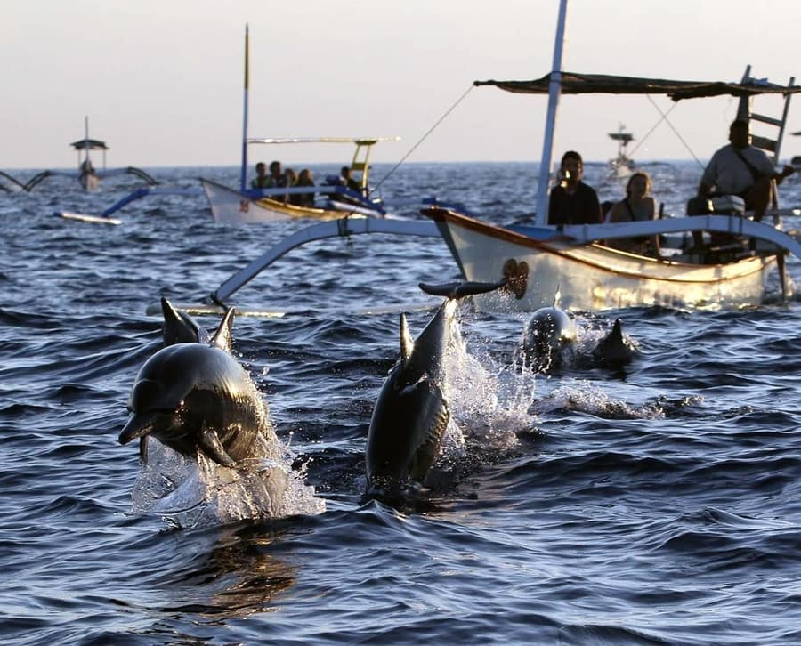 see dolphins in bali a thing not to do