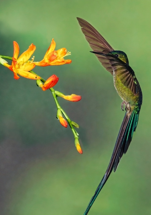 Ecuador, South America open to tourists