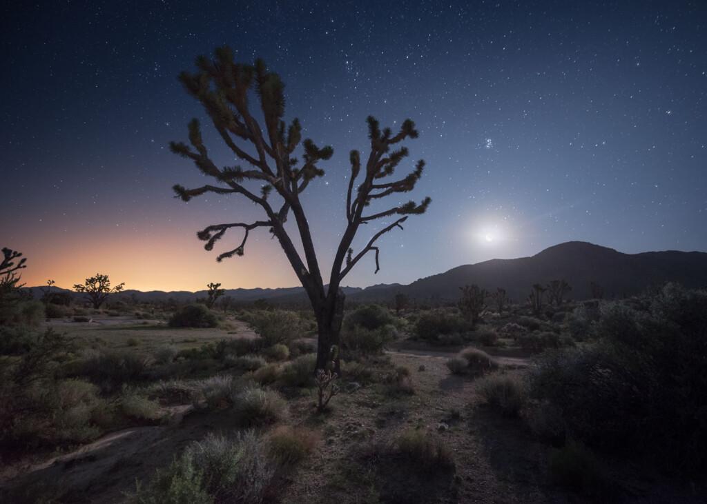 Mojave National Preserve, USA