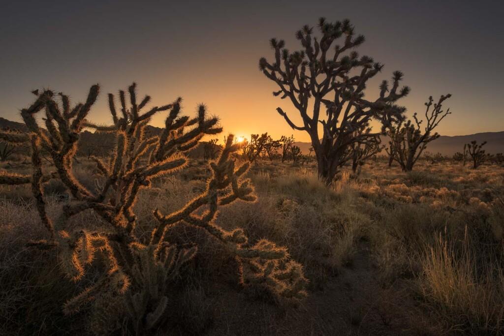 Mojave National Preserve, Estados Unidos