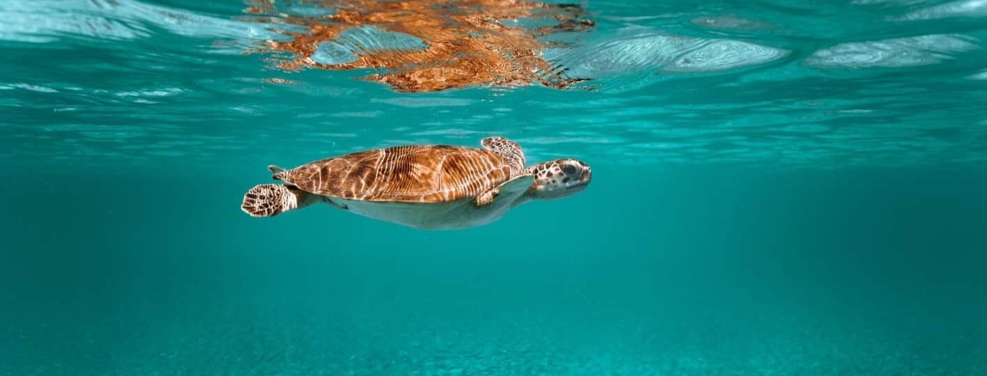 Is Aruba open for travel