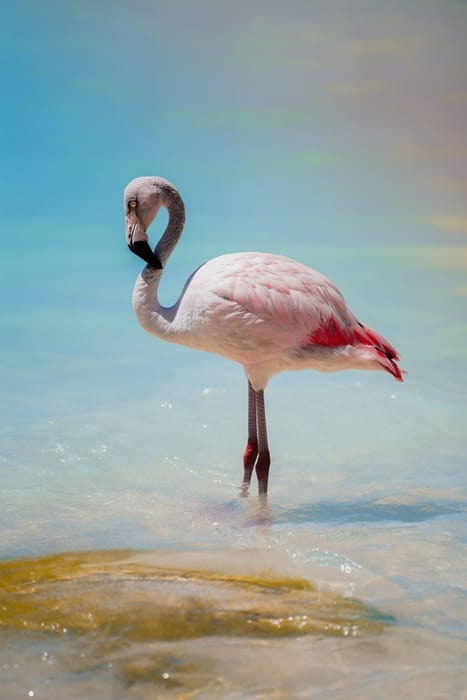 Paises que pueden viajar a Aruba