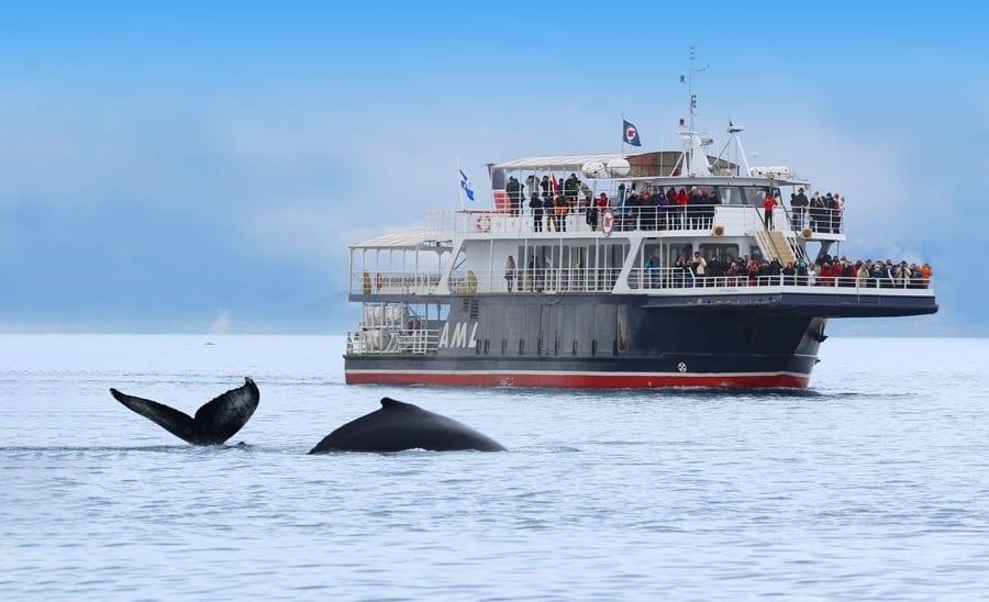 Orca spotting in Canada