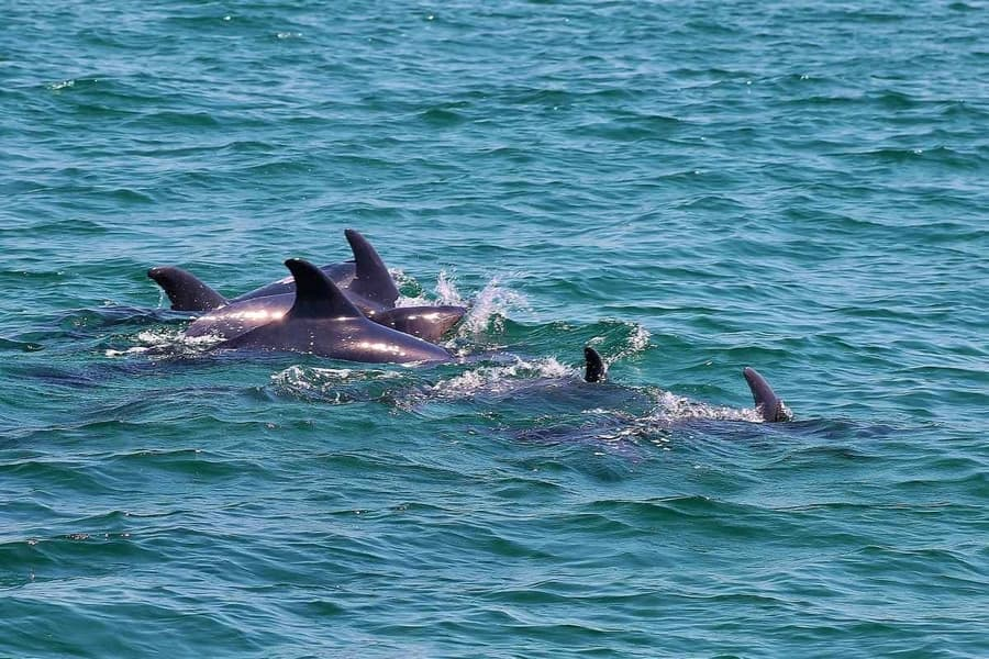 2-hour morning cruise, best whale-watching in Cape May New Jersey