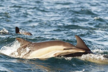 Dolphin tours in Cape May