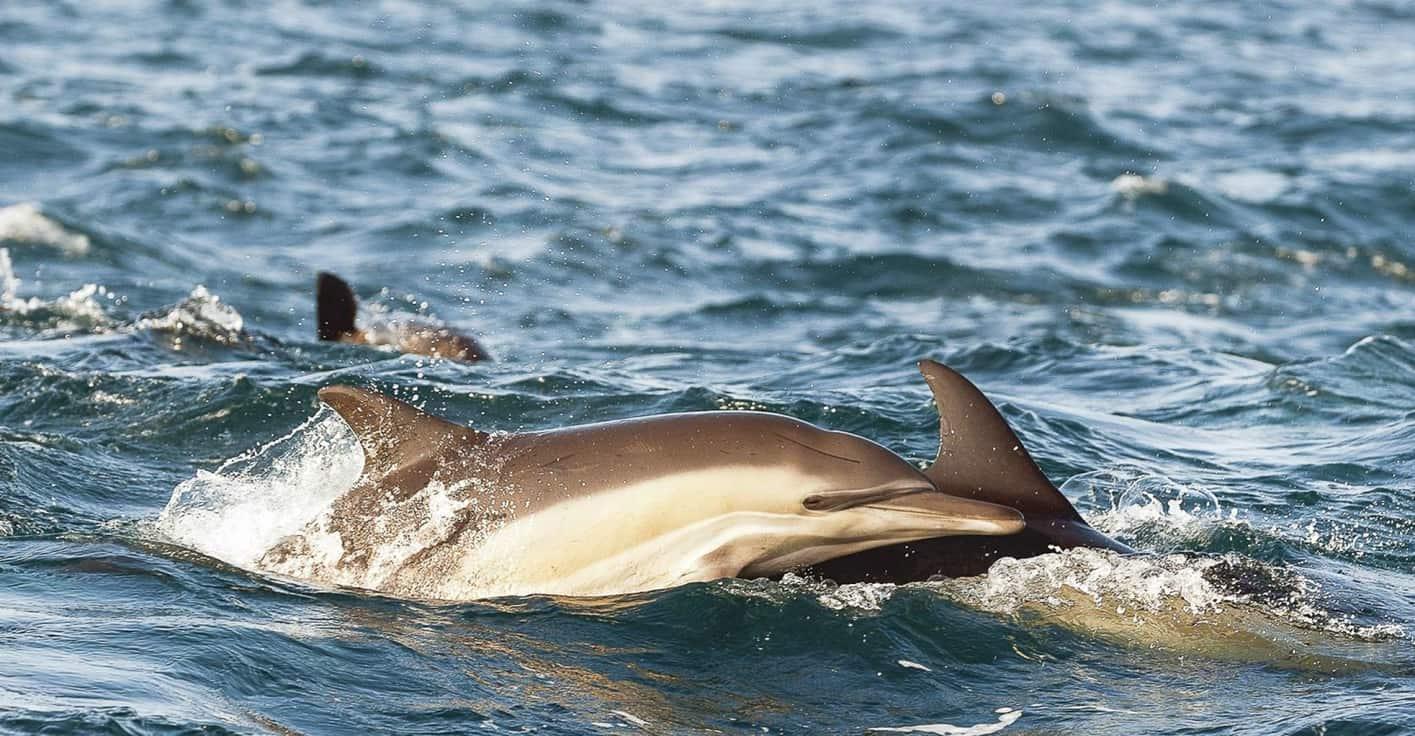 Scenic cruise, Cape May whale-watching season