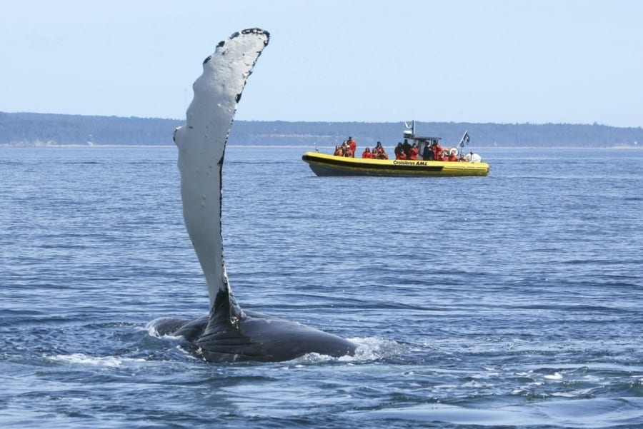 whale watching in canada where to go