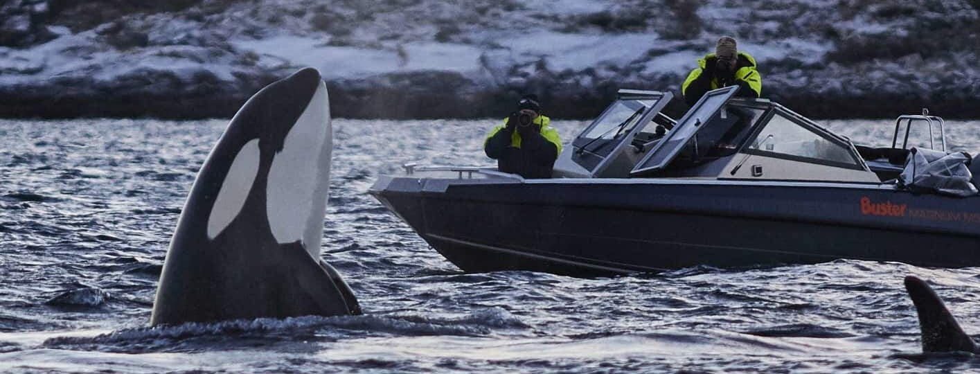Norway whale-watching