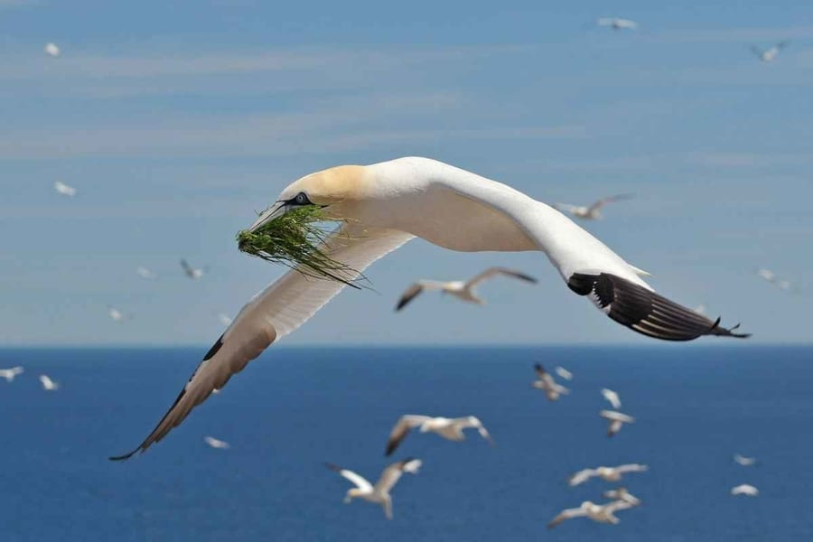 Seabirds in Cape May, whale-watching in Cape May New Jersey