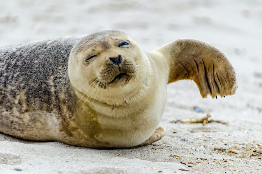 Gray and harbor seals, Cape May dolphin tours