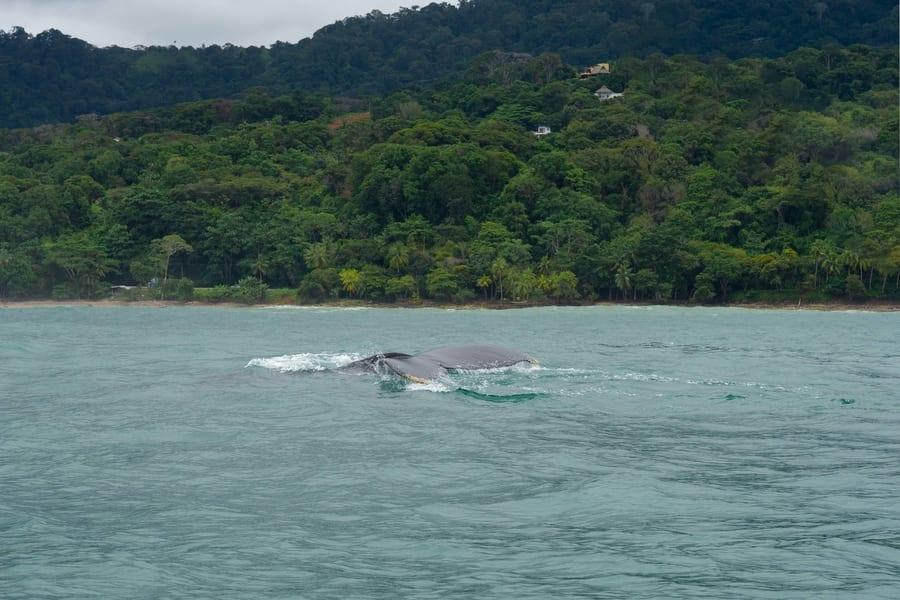 Tour avistamiento de ballenas en Costa Rica, orcas en Costa Rica