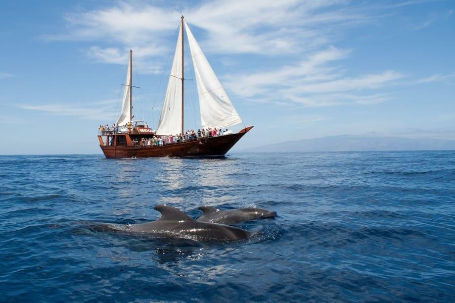 Cheap whale-watching in South Tenerife, whale-watching season Tenerife