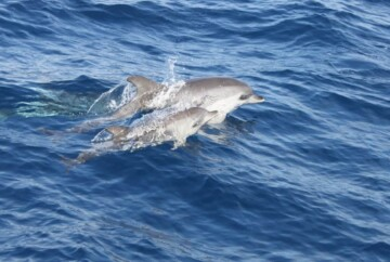 Avistamiento de ballenas en La Palma