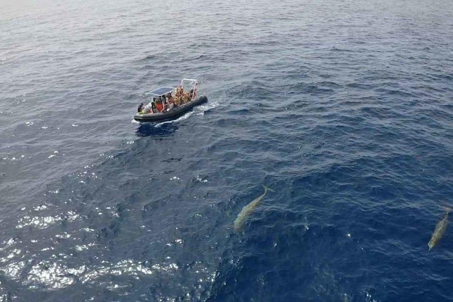 Fuerteventura whale-watching and dolphin tour, whales Fuerteventura