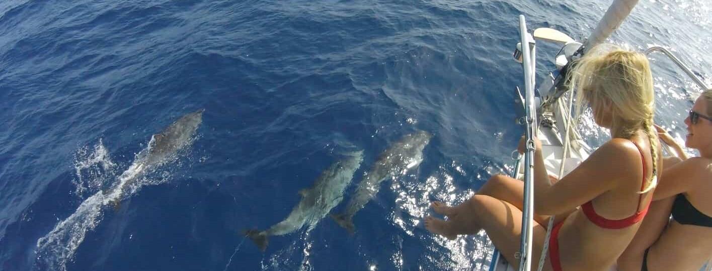 Avistamiento de delfines en fuerteventura