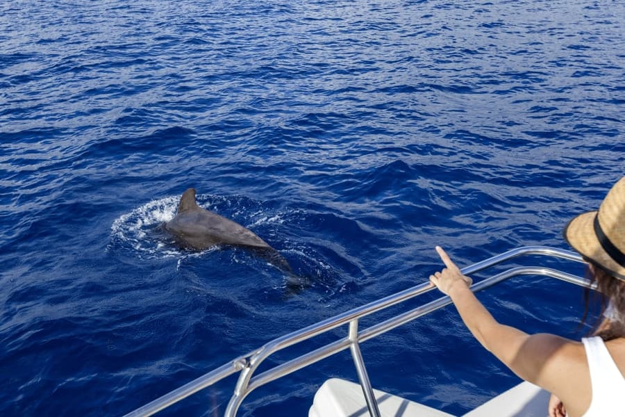 Whale-watching from Los Gigantes, Tenerife, best whale-watching in Tenerife
