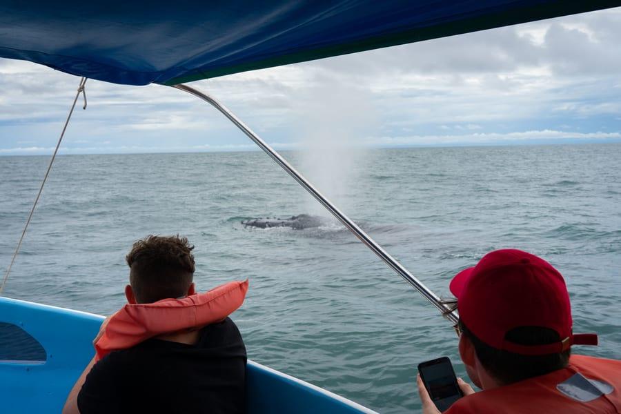Avistamiento de ballenas y delfines, tipos de ballenas en Costa Rica