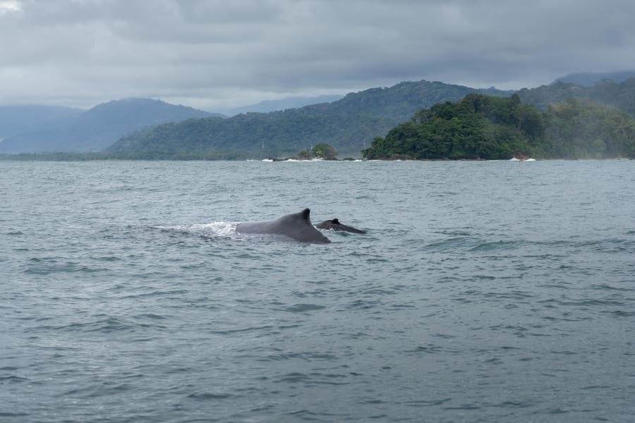 Ballena azul en Costa Rica