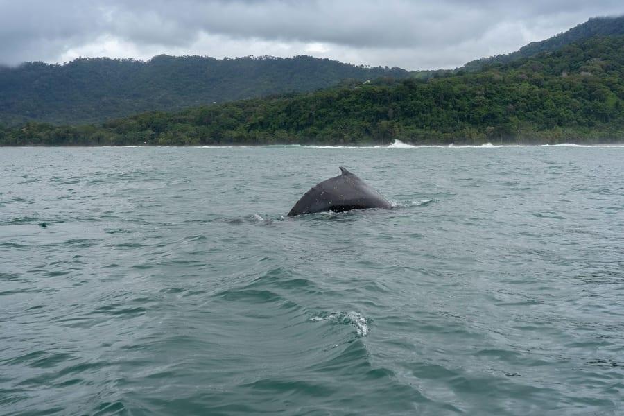 Ballenas en Costa Rica