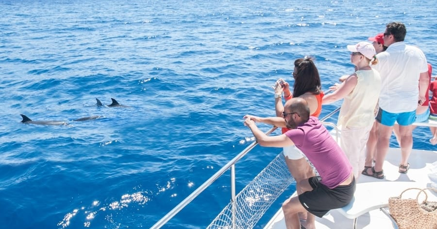 Whale and dolphin tour in Tenerife South with snorkeling, dolphin trip Tenerife