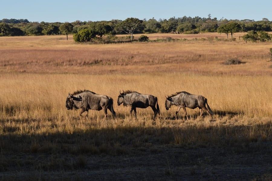 Reapertura al turismo de Zimbabwe