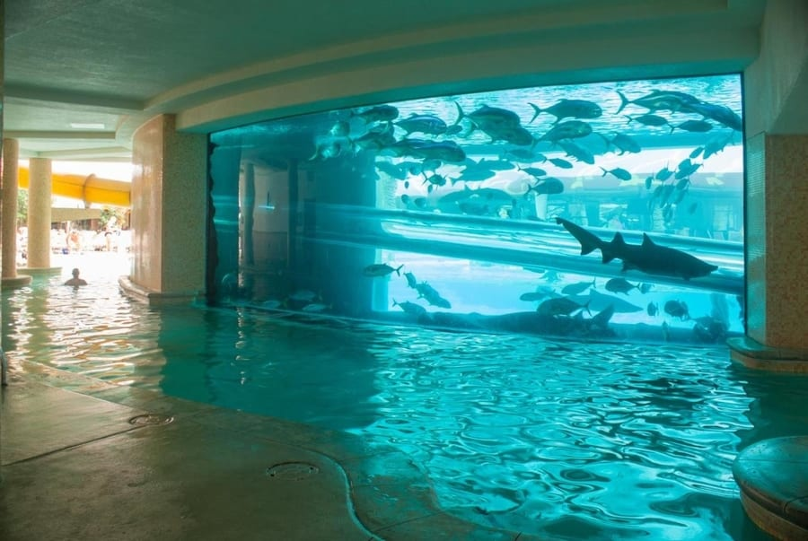 The Tank at Golden Nugget, best pools in las vegas for families