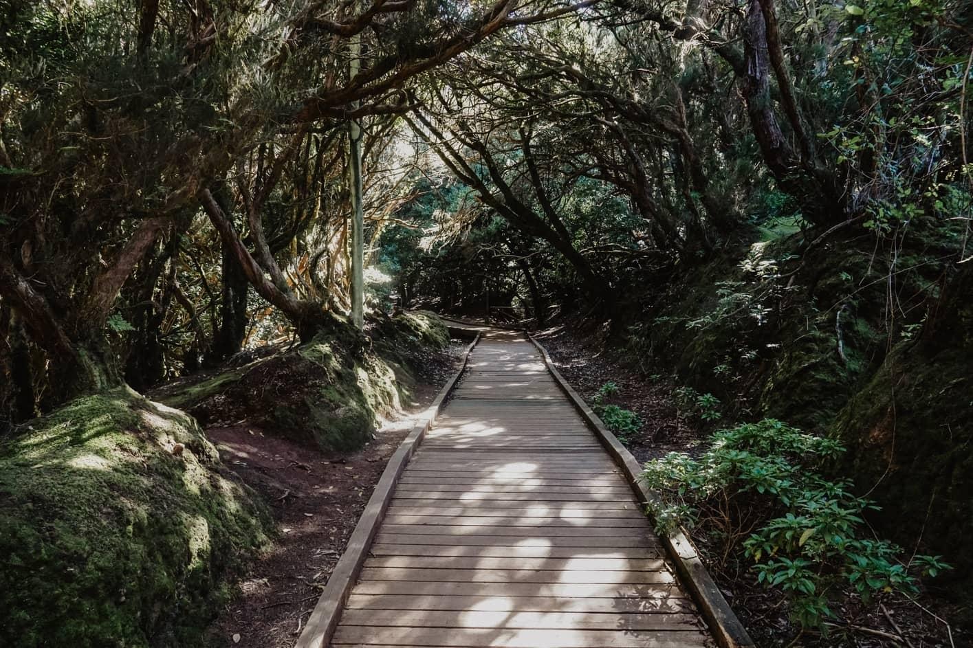 Trail of the Senses, Anaga, Tenerife