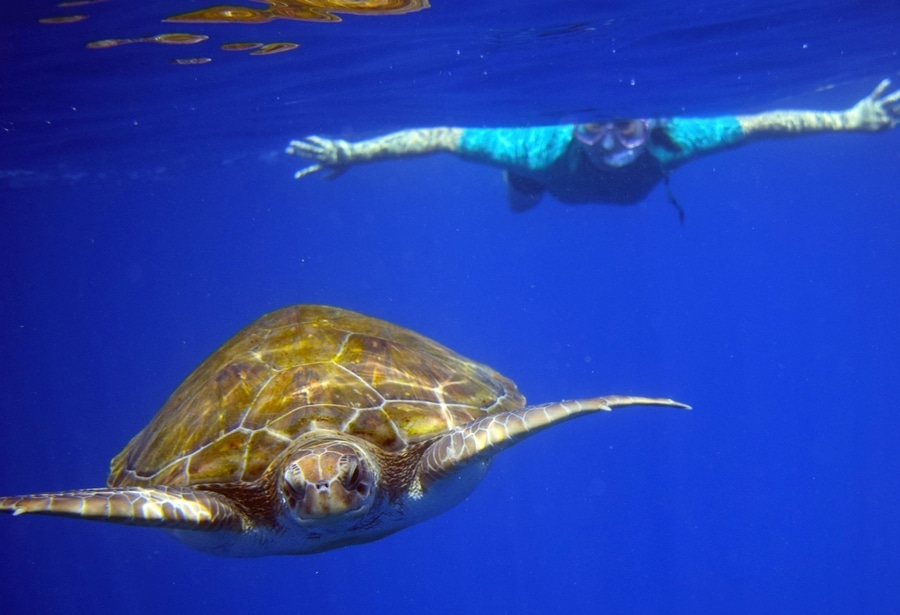 Snorkeling with turtles, day trips in tenerife canary islands