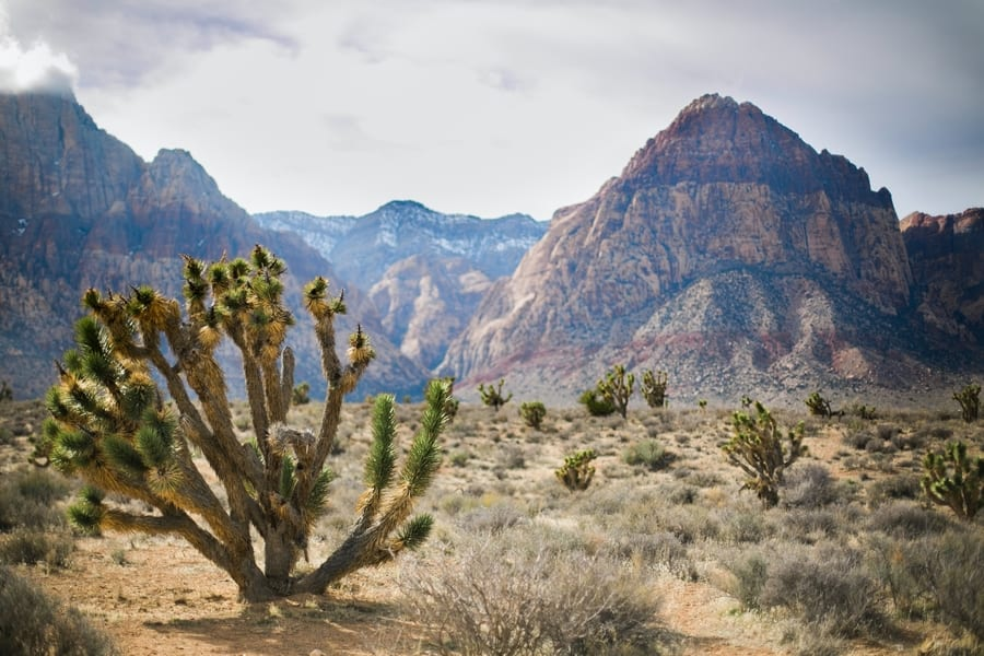 Red Rock Canyon, red rock canyon tour from las vegas