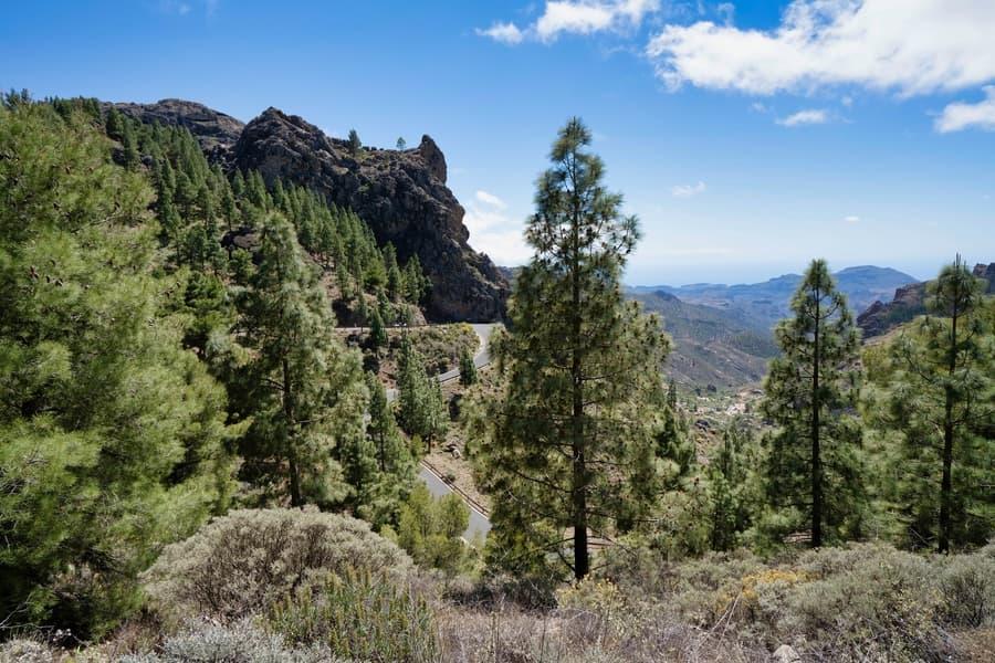 Los Tilos de Moya, place to visit in gran canaria