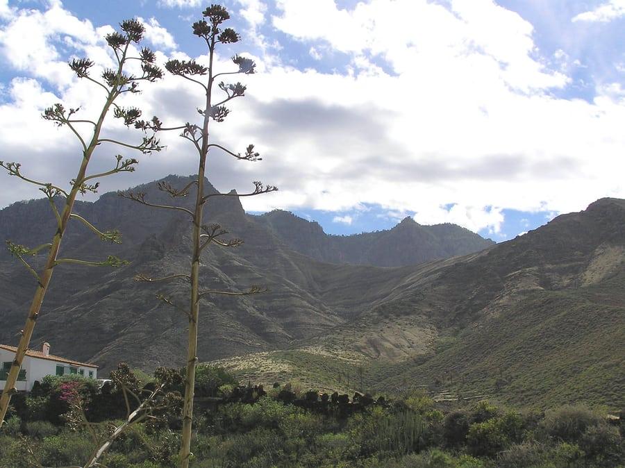 Valle de Agaete, activities to do in gran canaria